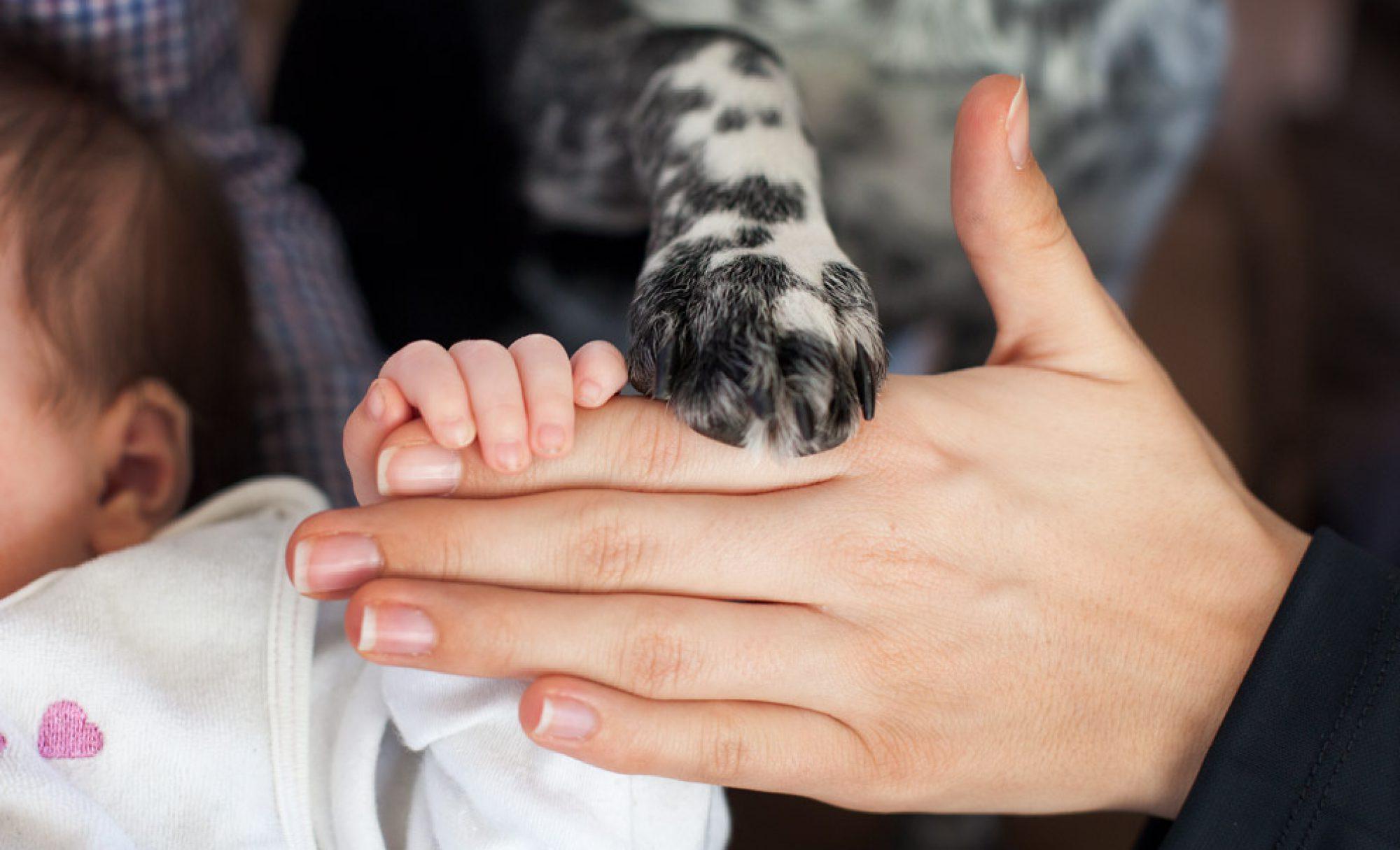 familiemithund
